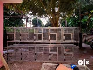Cages cheyth therum